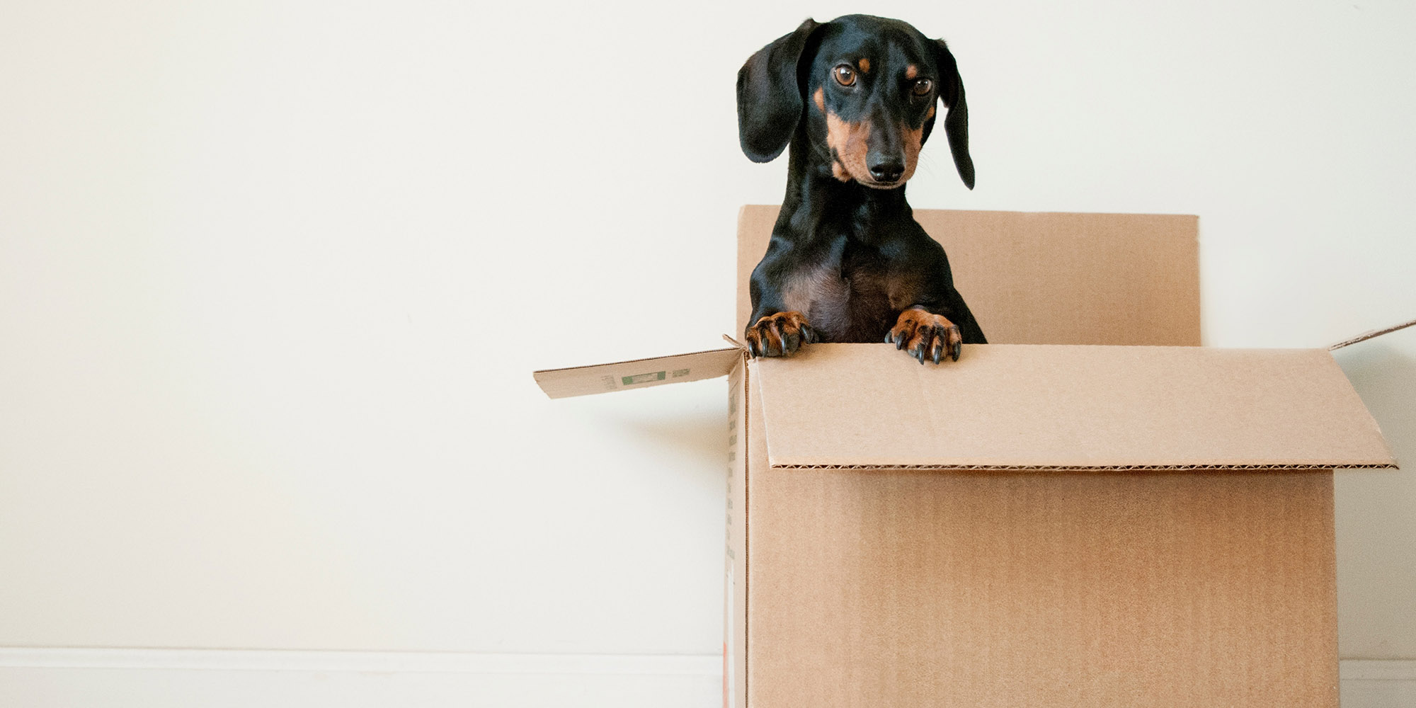 An image of dog in box to represent moving home and home mover mortgage Stirling
